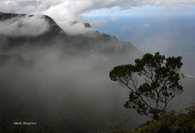 Tree in fog in Waimea Canyon Kauai