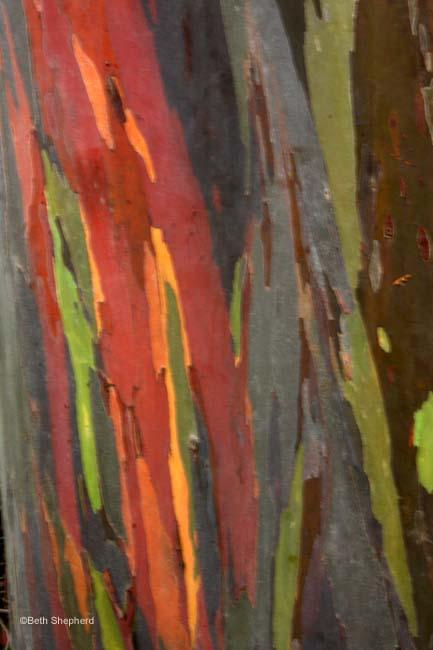 Tree bark Kauai