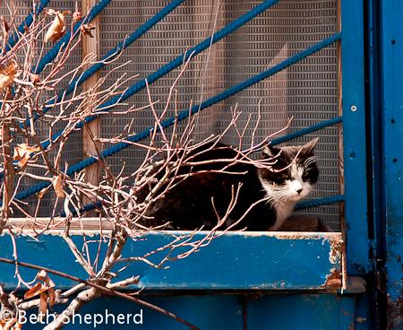 Gyumri cat in blue window, Armenia