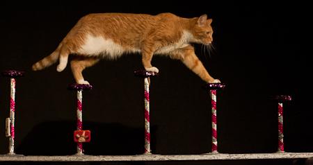 Acro-cat