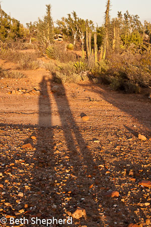 Baja desert shadows, Mexico