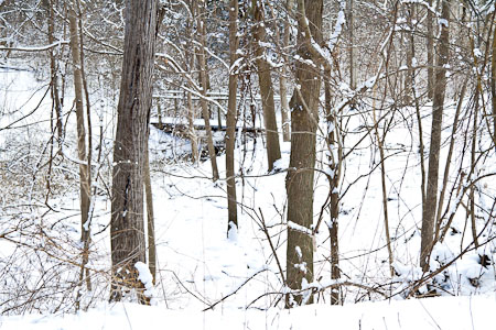 Fayetteville Bird Preserve in winter