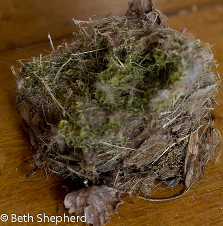 Chickadee nest large 2