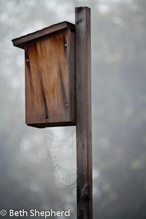 Spider web on birdhouse