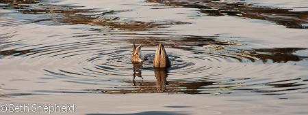 Upside down ducks