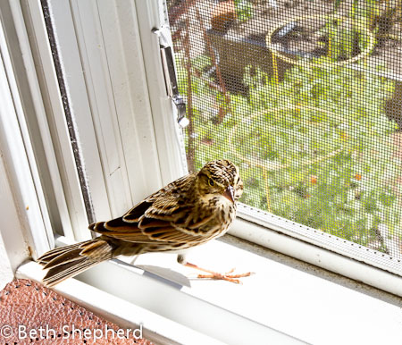 Bird in the house 2