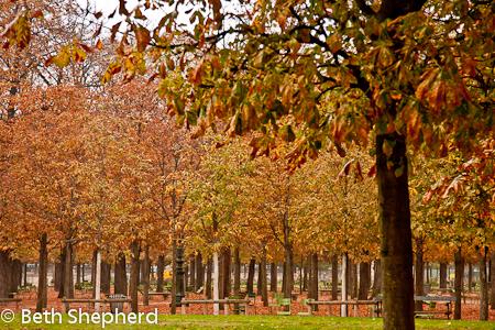 Fall leaves in Tuileries