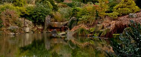 pond reflections Kubota Garden
