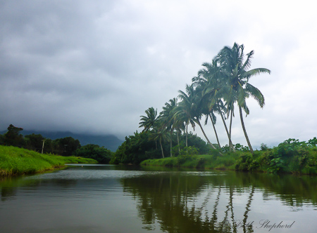 Palm trees over Hanalei River in Kauai