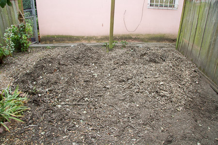 Poplar stumps ground