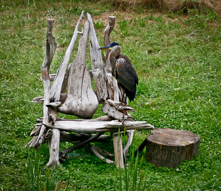 Our heron