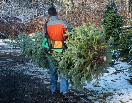 Christmas tree going home