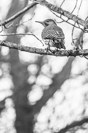 Flicker on branch