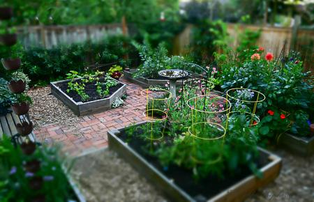 Garden July 1, 2015
