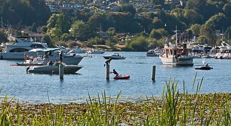 Fun in Lake Washington during Seafair