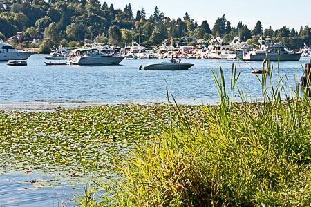 Seafair Seward Park boats