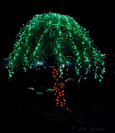 Palm tree lights
