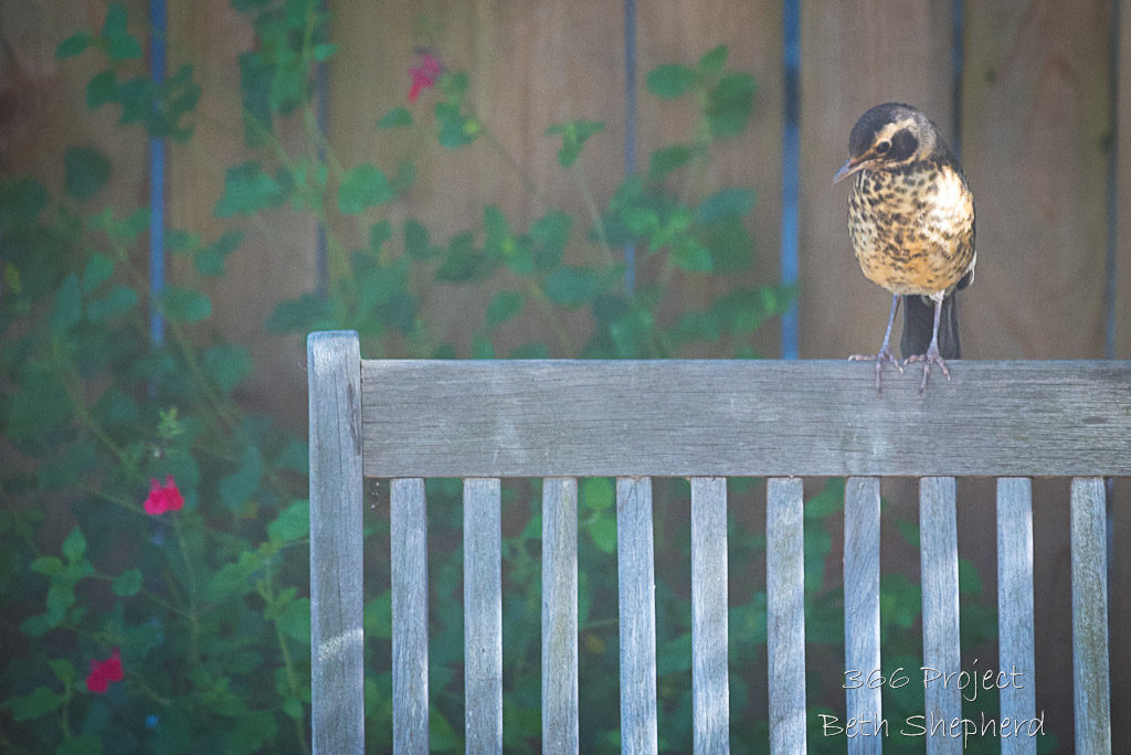 Baby robin on chair