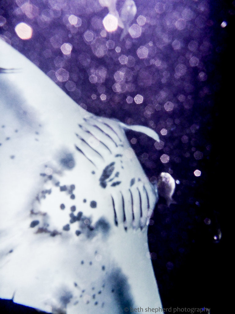 Identify individual mantas by markings