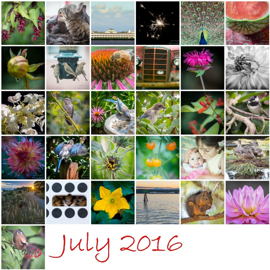 July 2016 photos