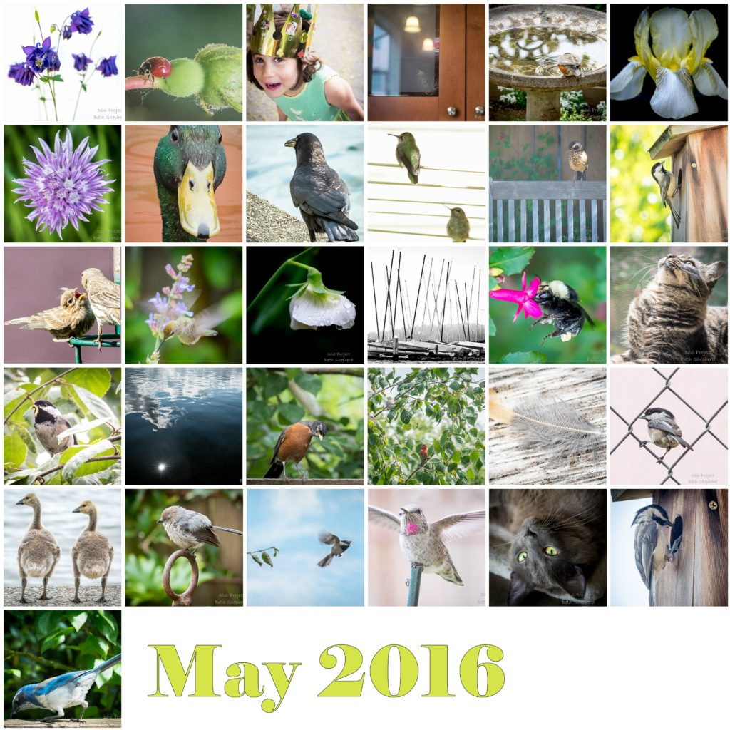 May 2016 photos
