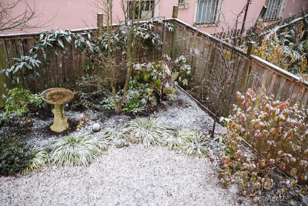 Snow in garden 2016