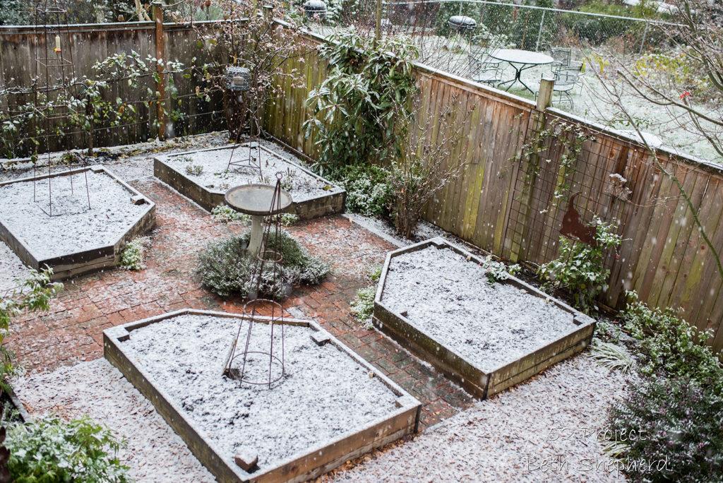 December 2016 garden photo project