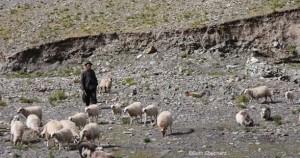 Shepherd man