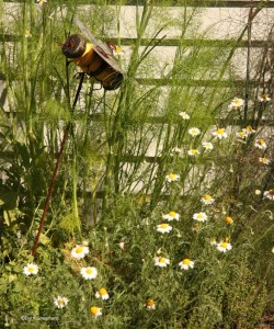 Chamomile in herb box