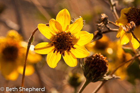 Backlit gold flowers