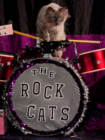 Cat on drums, Acro-cats