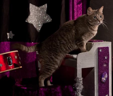 Cat on piano, Acro-cats
