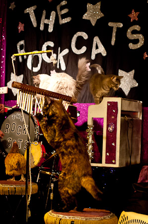 The Rock Cats, Acro-cats
