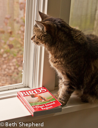 Maggie with bird book 1