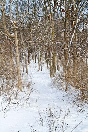 Fayetteville Bird Preserve path