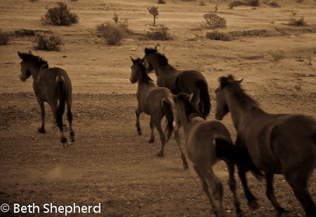 Horses in the Baja desert