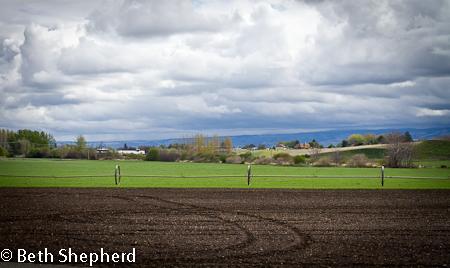 Walla Walla clouds and fields