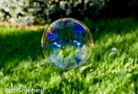 Volunteer Park bubble