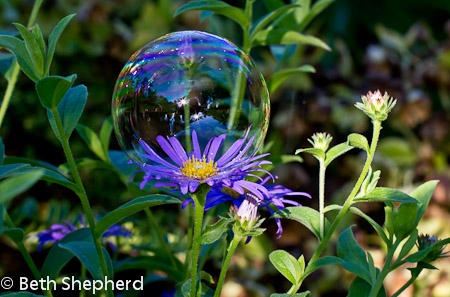 Volunteer Park flower bubble
