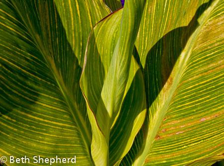 Volunteer Park green leaves