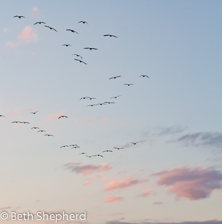 Birds in flight over PA