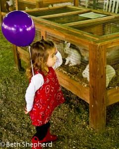 Remlinger Farms animals