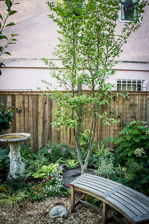 Garden in August
