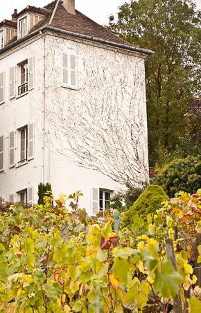 Paris Clos Montmartre vineyard