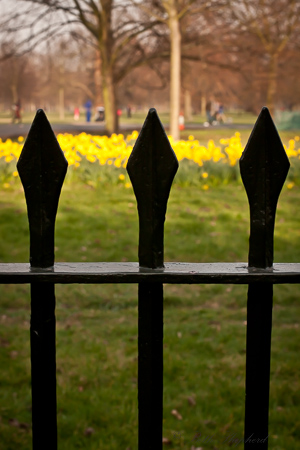 Kensington Garden iron fence