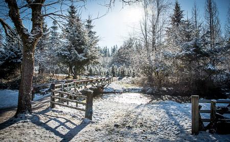Enchanted Winds Tree Farm