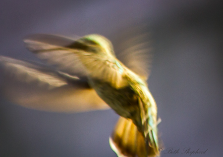 Hummingbird against the light