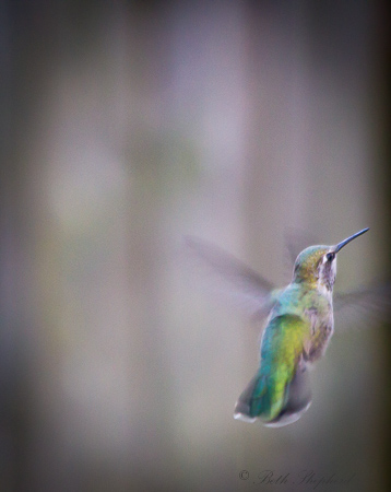 Hummingbird coat of green