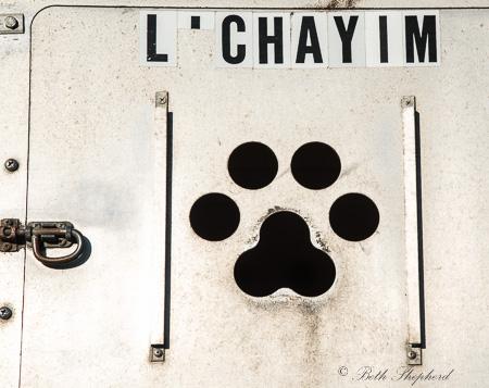 Sled dog L'Chayim