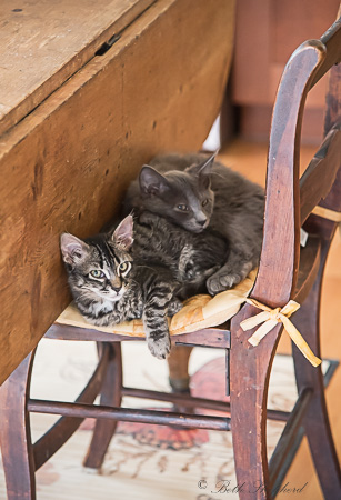 Two cats and a chair